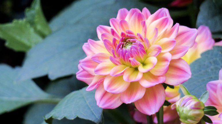Ako správne strihať kvety? Tu je postup