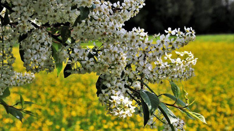 Kedy a prečo prerezávať stromy, kríky a kvety?