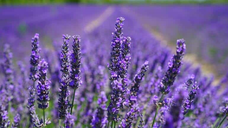 Jedlé kvety a vňať z vašej záhrady, ktoré vyhadzujeme