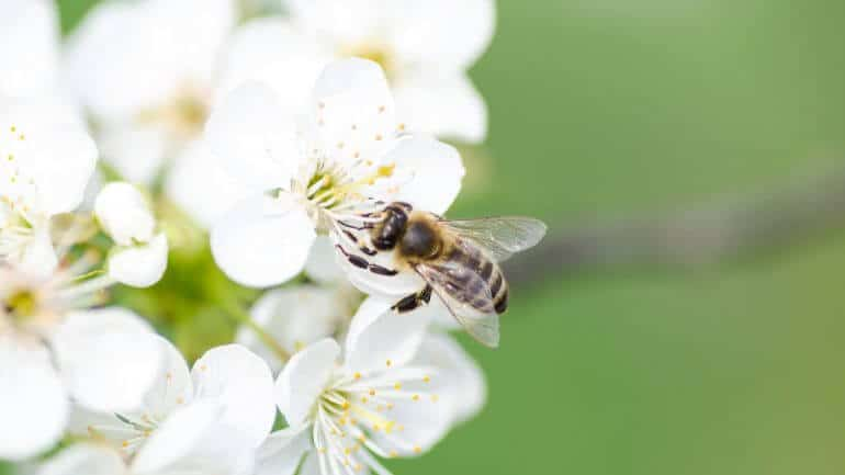 Ako podporiť opeľovanie a prilákať včely na vašu záhradu