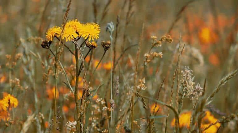 I. Liečivá moc byliniek: Čo všetko sa dá zbierať?