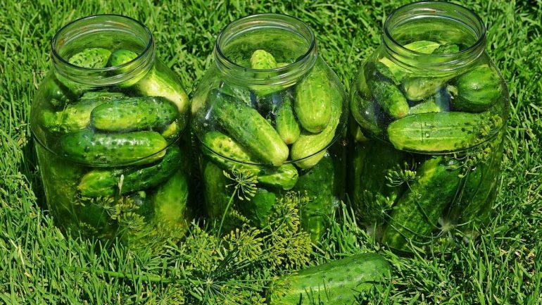 Kvasené uhorky ako ich pripraviť?