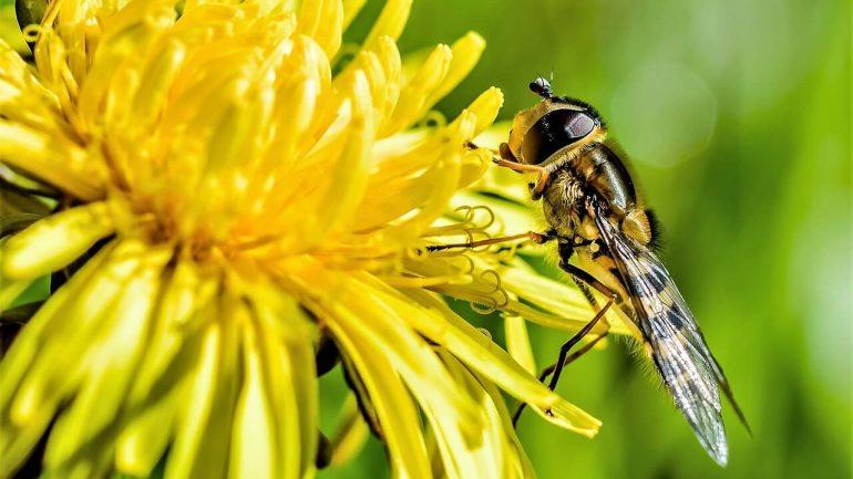 Tieto rastliny z vašej záhrady bojujú proti hmyzu