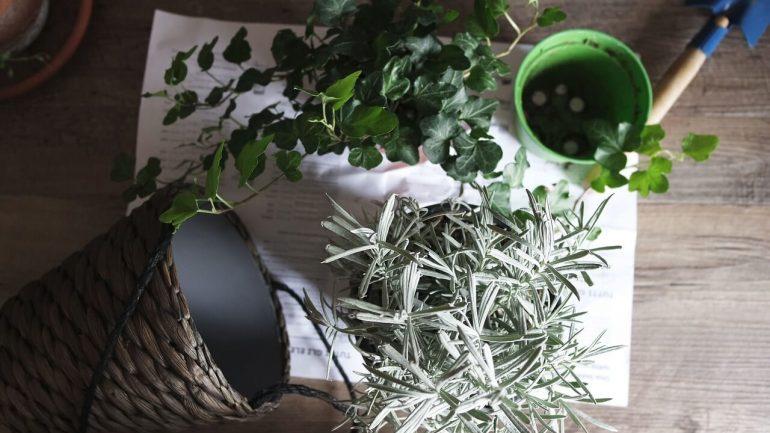 Rozmnožujeme izbové rastliny trikrát inak