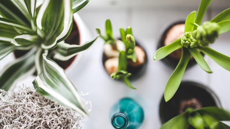 9 druhov zemín, ktoré môžete potrebovať pri pestovaní izbových rastlín