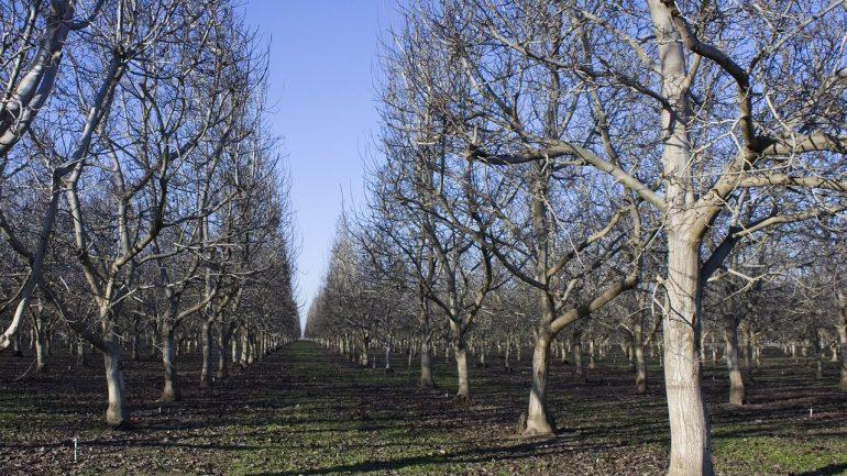 Ako rezať ovocné stromy? Existujú 4 spôsoby