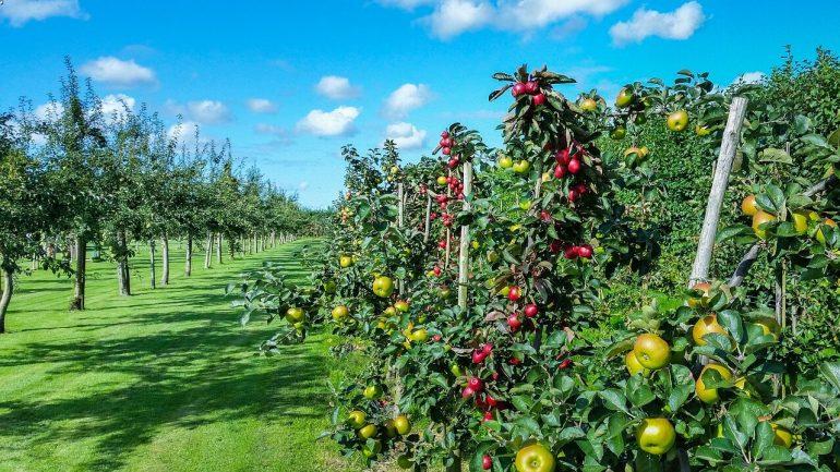 Ako vybrať správny ovocný strom na vašu záhradu plus jeho sadenie