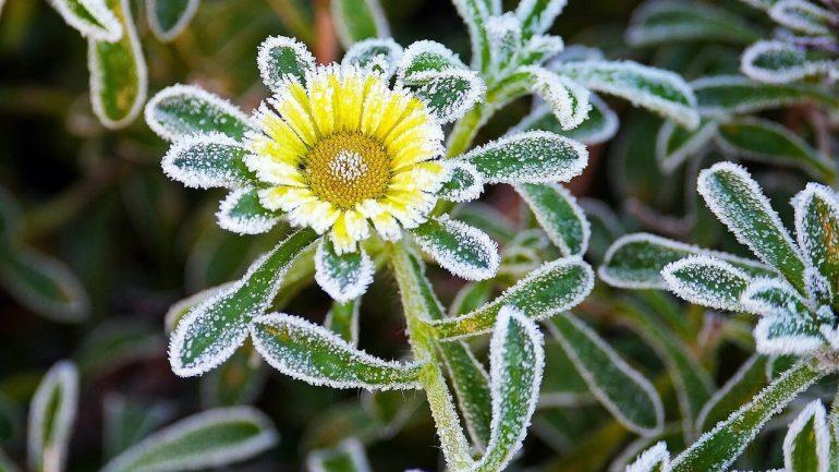 Ako ochrániť vaše rastliny pred nečakaným mrazom