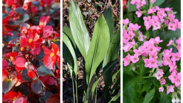 20 krásnych izbových rastlín, ktoré vyžadujú málo starostlivosti, časť druhá