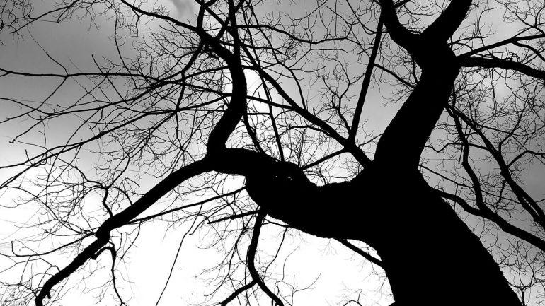 Ako si dobiť energiu? Vyskúšajte stromy