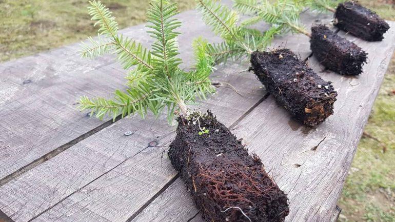 Láka vás vypestovať si vlastný vianočný stromček? Teraz je ten správny čas