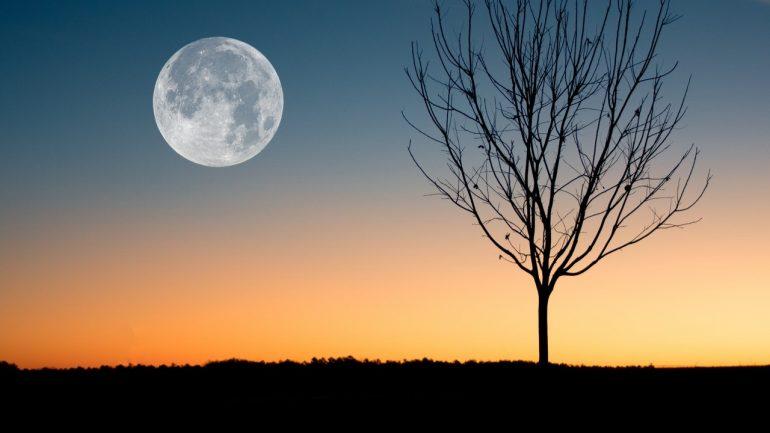 Záhradníčenie pri svite Mesiaca je fenomén, ktorý musíte vyskúšať