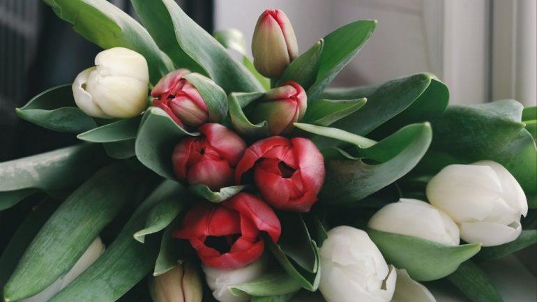 Takto vám nebudú rezané tulipány rýchlo opadávať