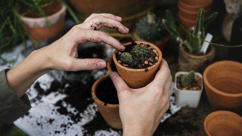 Vypestujte si doma kaktus: Ako sa o neho starať, aby vydržal po celý rok?