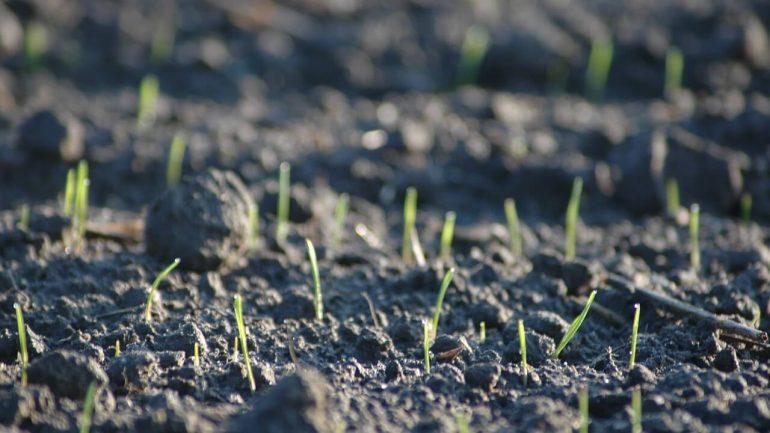 Záhrada na jar: Začíname s vysádzaním
