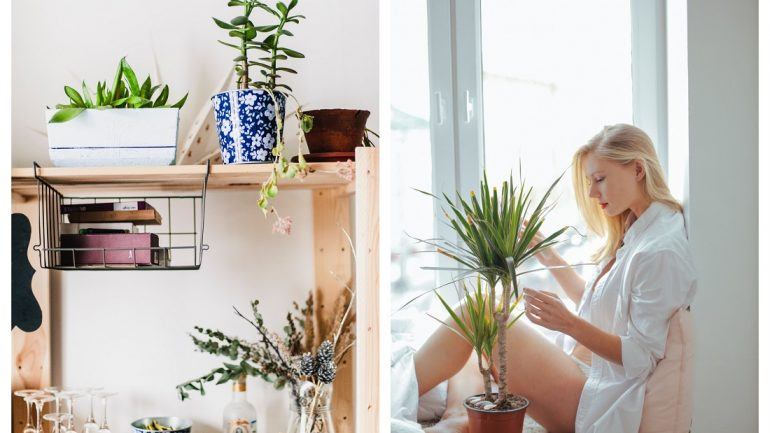 Ako živé! Zakamuflujte umelé rastliny, aby vyzerali skutočne