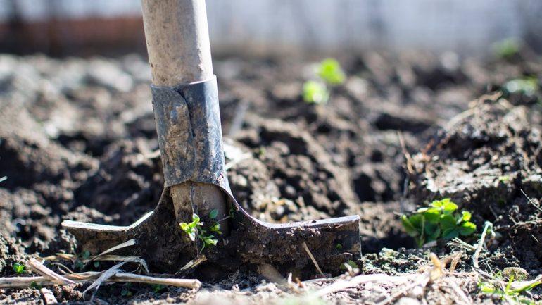 chyby pri pestovaní zeleniny