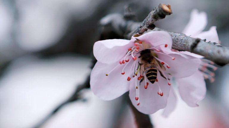Pomôžte vymierajúcim včielkam prežiť: Urobte im vo vašej záhrade domov