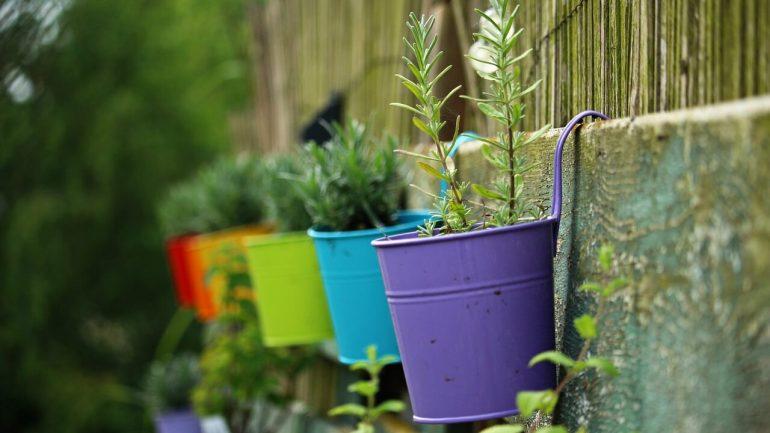 Čo sadiť a nesadiť vo vašej závesnej záhrade