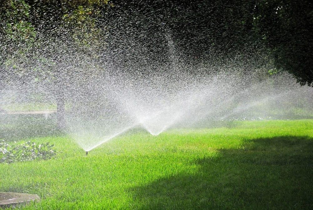 ako často polievať trávnik