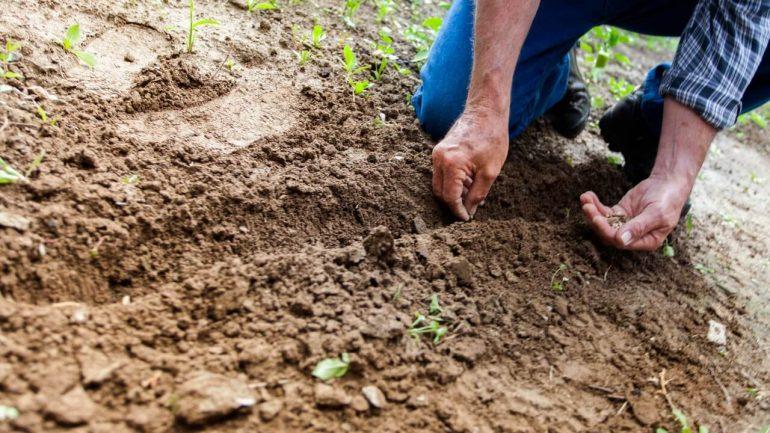 5 trendov pre vašu záhradu