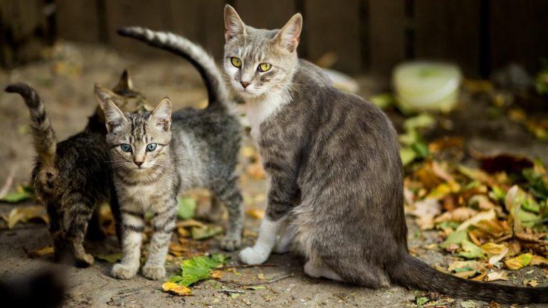 Najčastejšia mačacia skrýša: Kde ju hľadať?