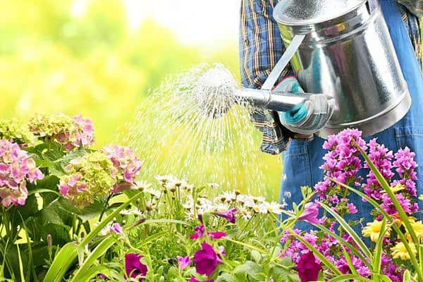 Ako zavlažovať záhradu