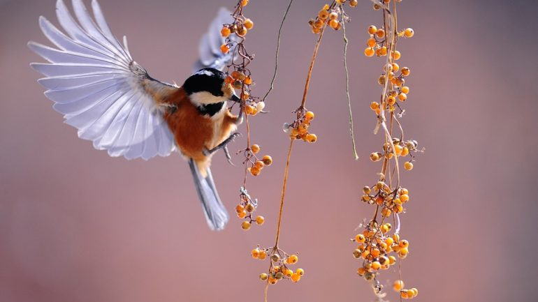 ako prilákať motýle a vtáčiky do záhrady