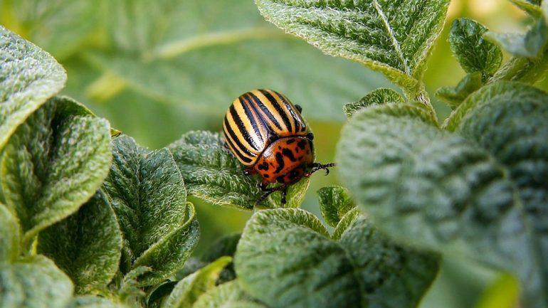 Ochráňte svoju záhradu proti chorobám, škodcom a burinám.