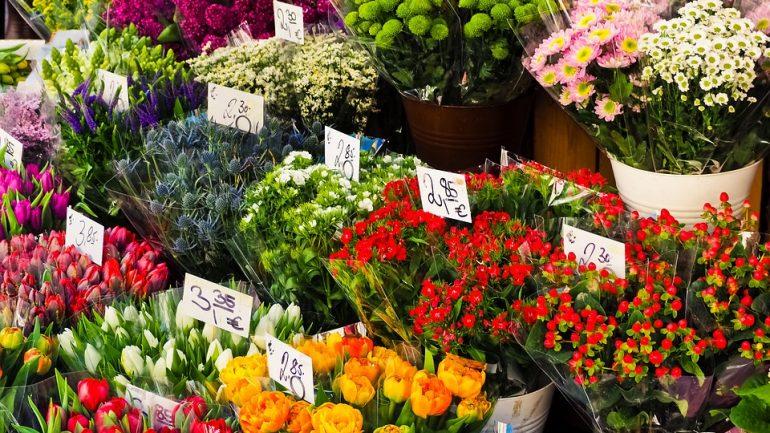 chyby pri kupovaní nových rastlín