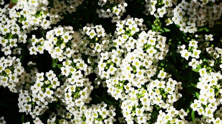 najlepšie rastliny do závesných košíkov