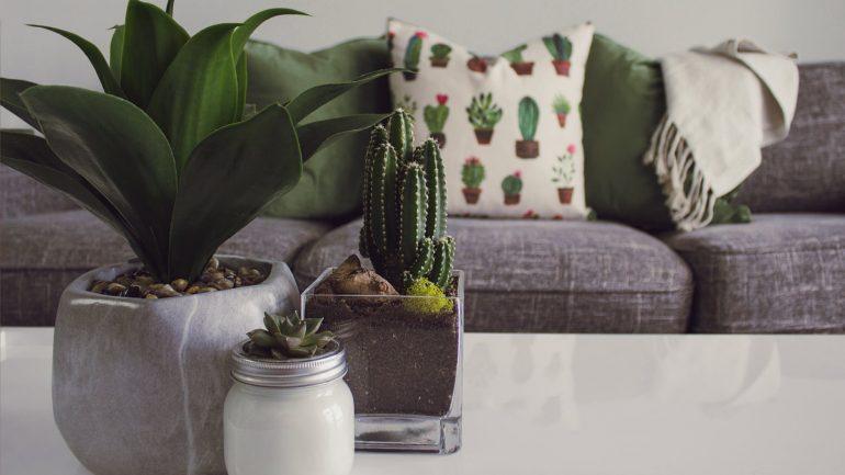Domáca kaktusová záhrada: Čo potrebujete vedieť?