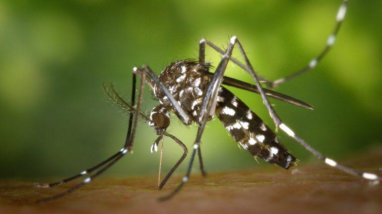 Ako sa chrániť pred komármi pri práci v záhrade