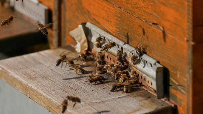 Pravda a lož o včelách: Vedeli ste toto o nich?