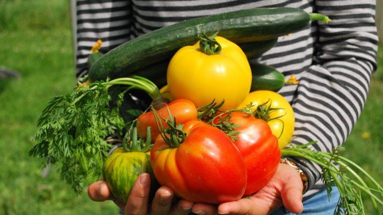 Chyby, ktoré môžu zničiť vašu zeleninovú záhradu