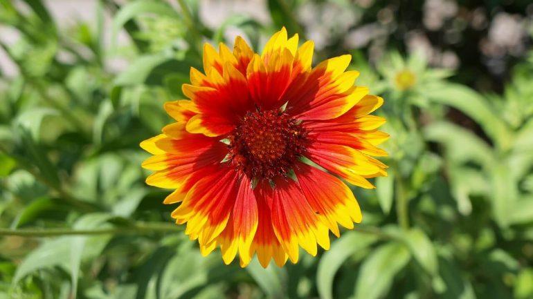 6 rastlín, ktoré budú krásne aj počas sucha