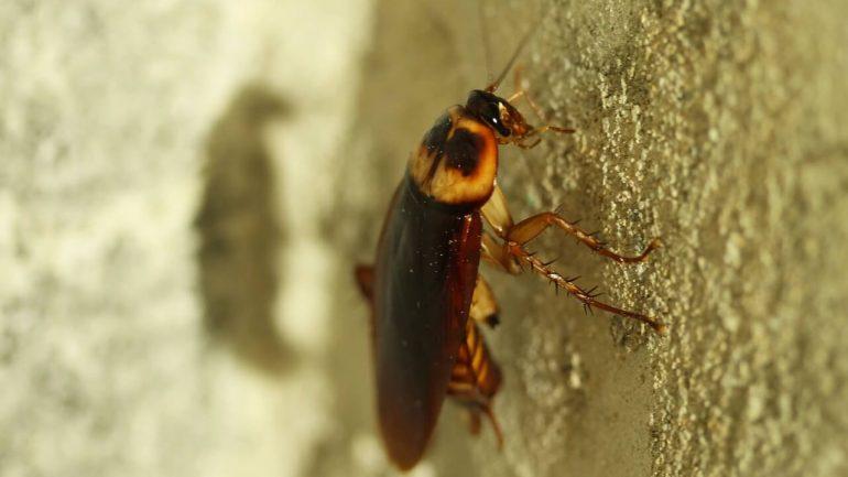 Ako sa zbaviť švábov