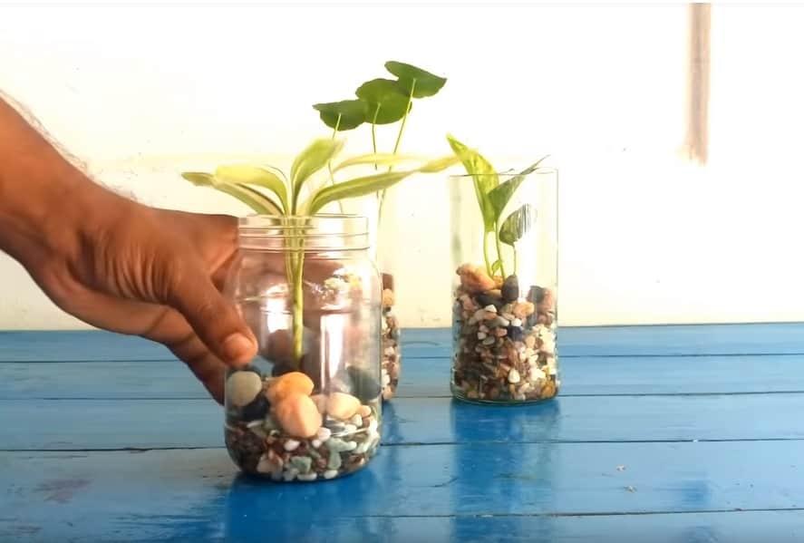 postup ako si založiť záhradku bez pôdy a z recyklovaného materiálu