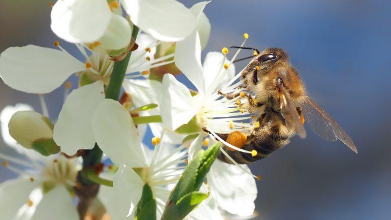 500 miliónov včiel v Brazílii zahynulo v priebehu 3 mesiacov