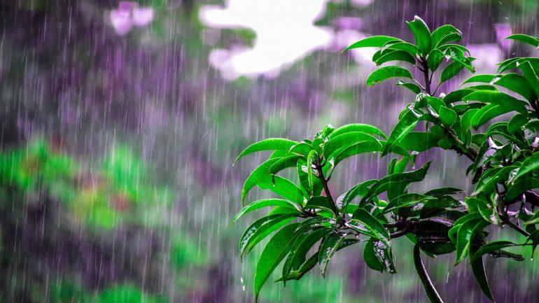 sucho v záhrade - tipy na riešenie