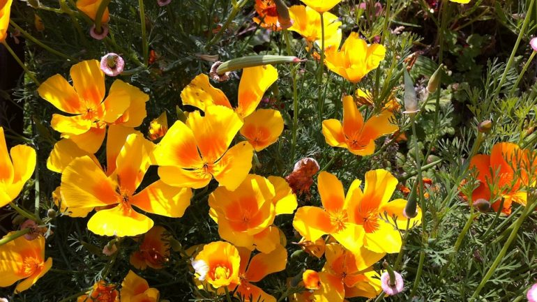 Rastliny, ktoré prosperujú aj v období sucha
