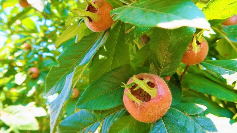 Vysaďte si netradičné hity záhradkárskej sezóny