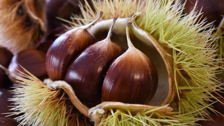 Aké druhy gaštanu poznáme a prečo ho pestovať?