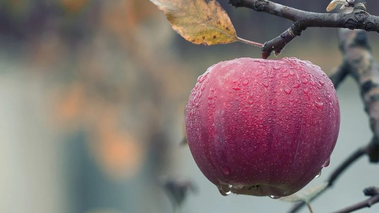 jablko - ovocnú záhradu