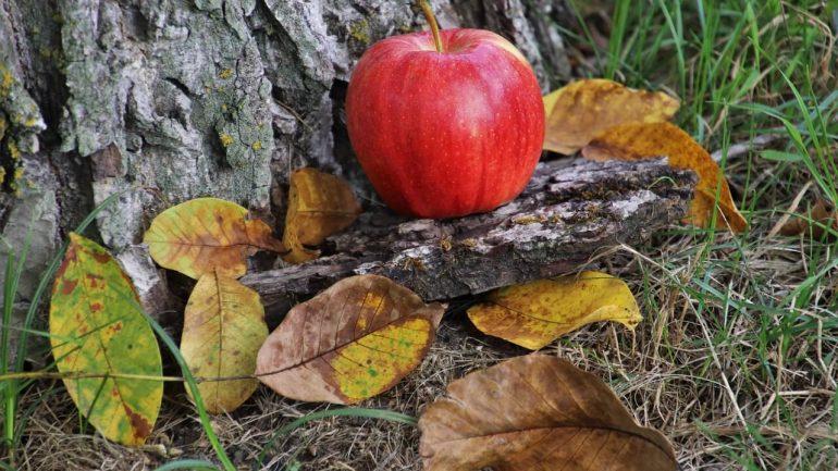 10 základných úloh jesennej záhrady, II. časť
