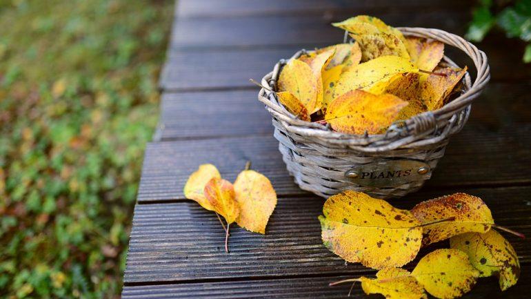 tipy na krásnu jesennú záhradku
