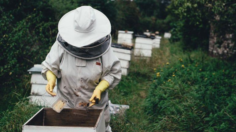 chov včiel