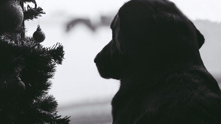 Najlepšie tipy na starostlivosť o živý vianočný stromček