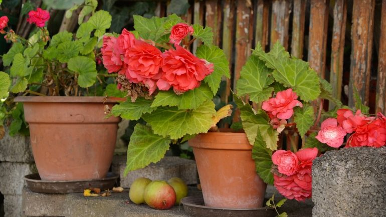 Kalendár prác pri pestovaní balkónových rastlín