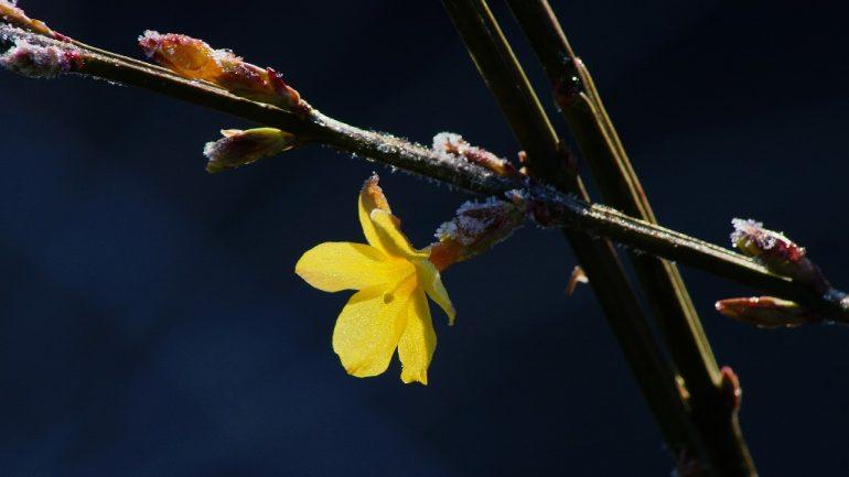 6 druhov zimných kvetov – II. časť